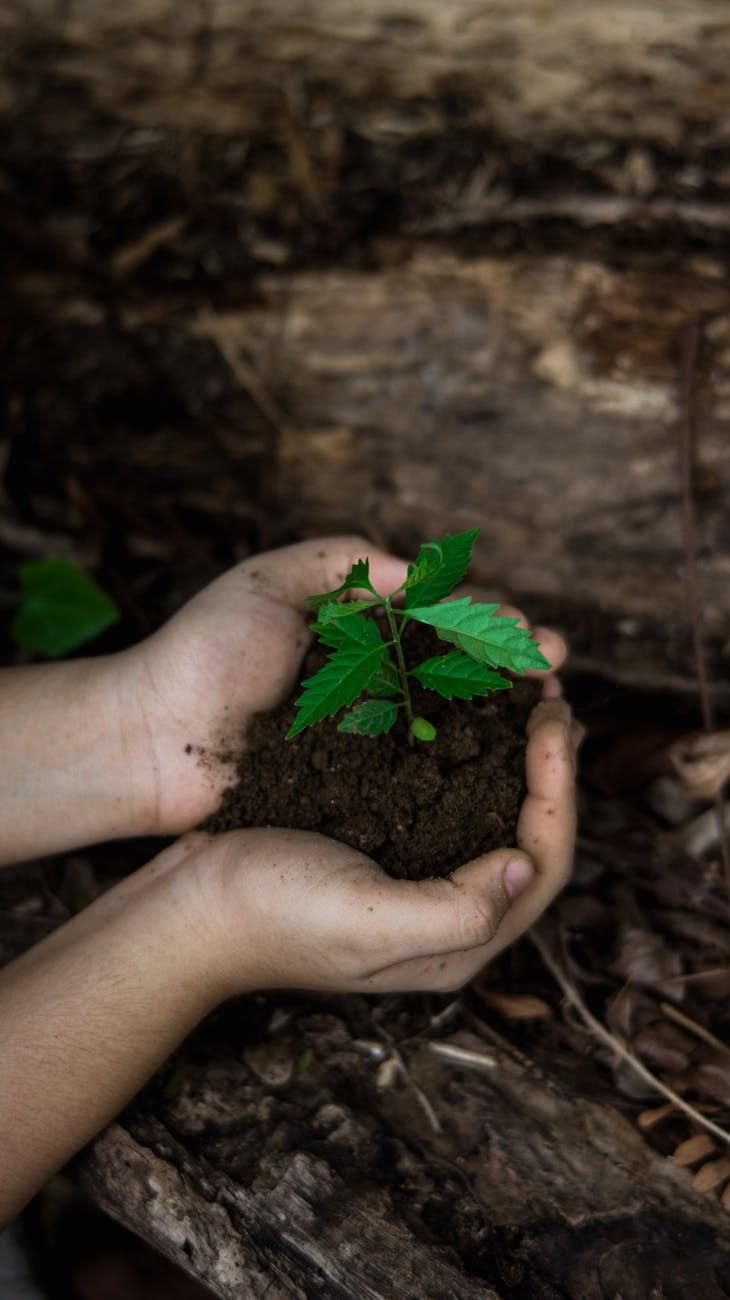 Young Child Gardening