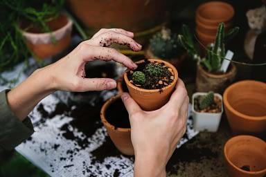 Garden holiday tips
