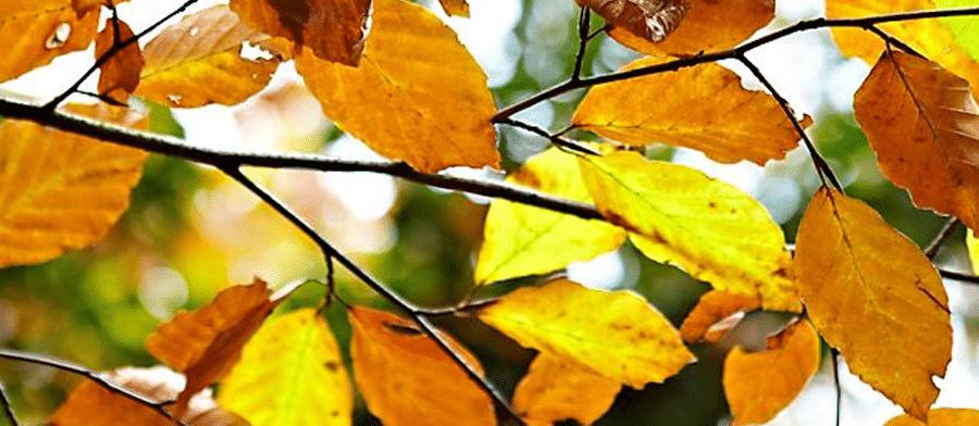 autumn green